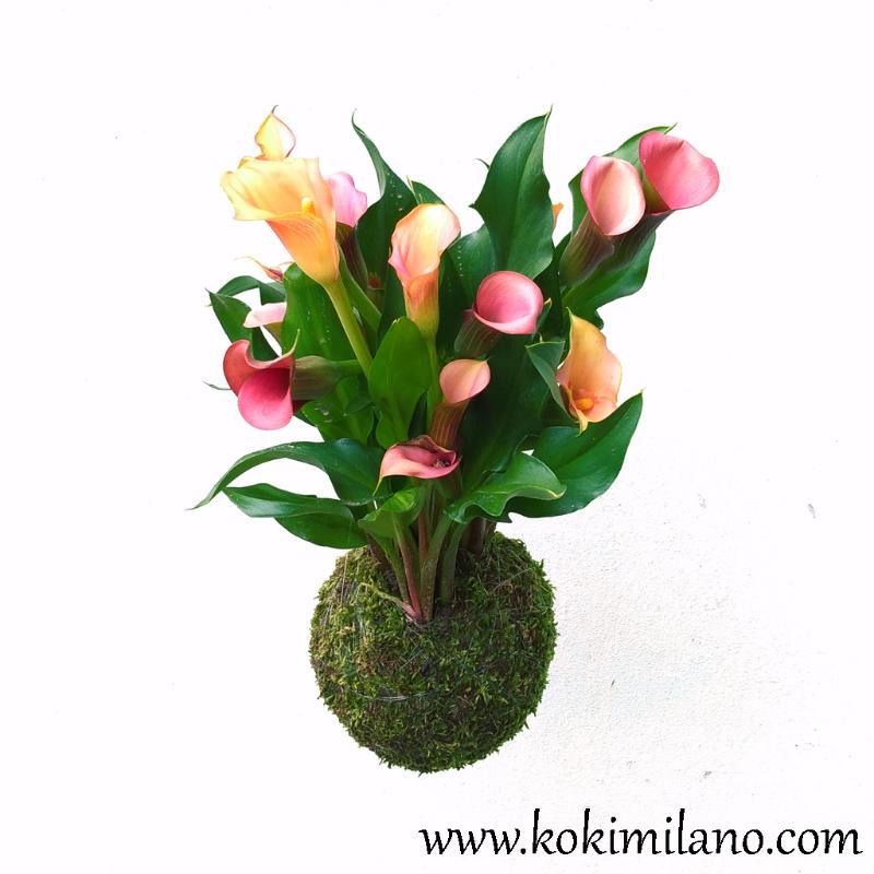 Kokedama-Calla-del-Circeo,-kokedama-flowers,-kokedama-Milano,-wall-flowers,-Fiori-volanti-,-Kokedama-Milano