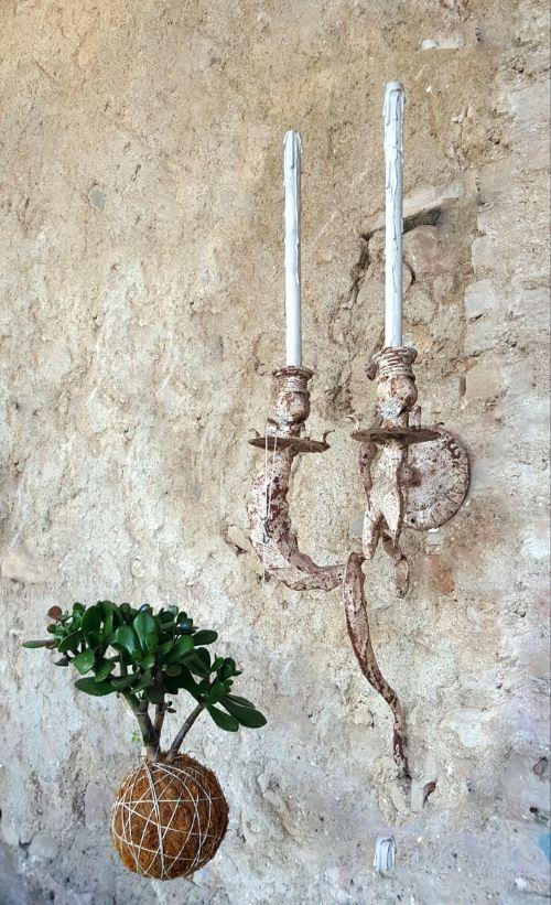 Kokedama-di-Crassula-ovata-o-Albero-di-Giada