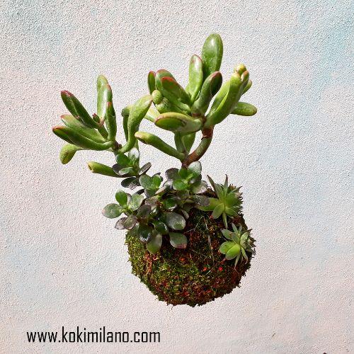 Kokedama-Succulens-Mix:-Crassula,-Echeveria,-Pianta-di-Giada,-Euphorbia