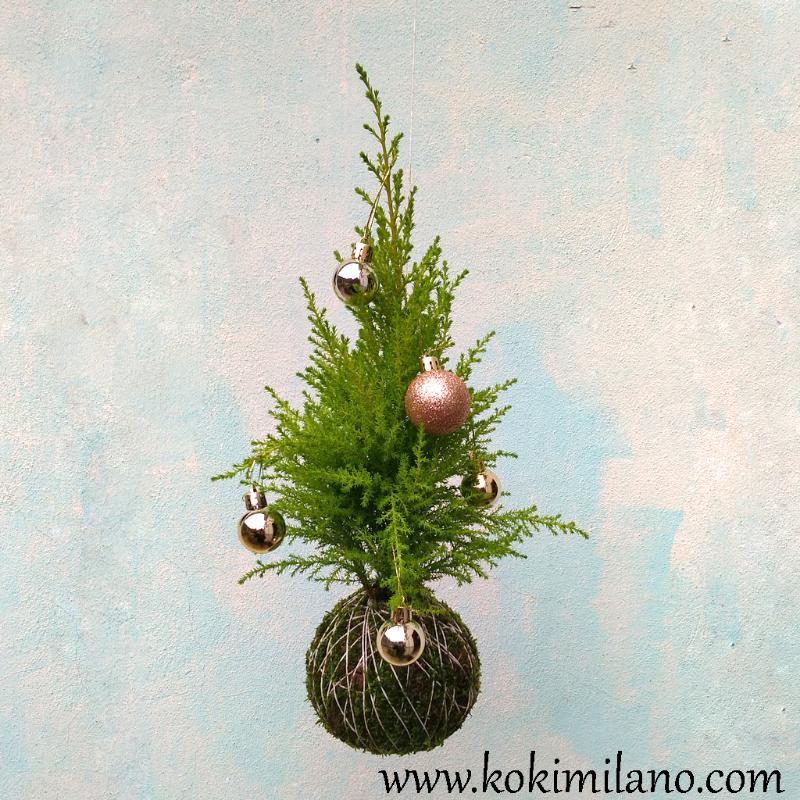 Kokedama-Pino,-Christmas-Kokedama,-pino-di-Natale,-String-Garden,-Moss-ball,-Palla-di-Muschio,--verde-verticale